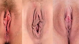 Pussy Compilation