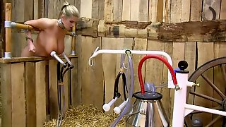 Hucow Katarina Big Nipples Milked
